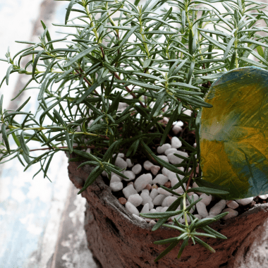 uses for rosemary herb