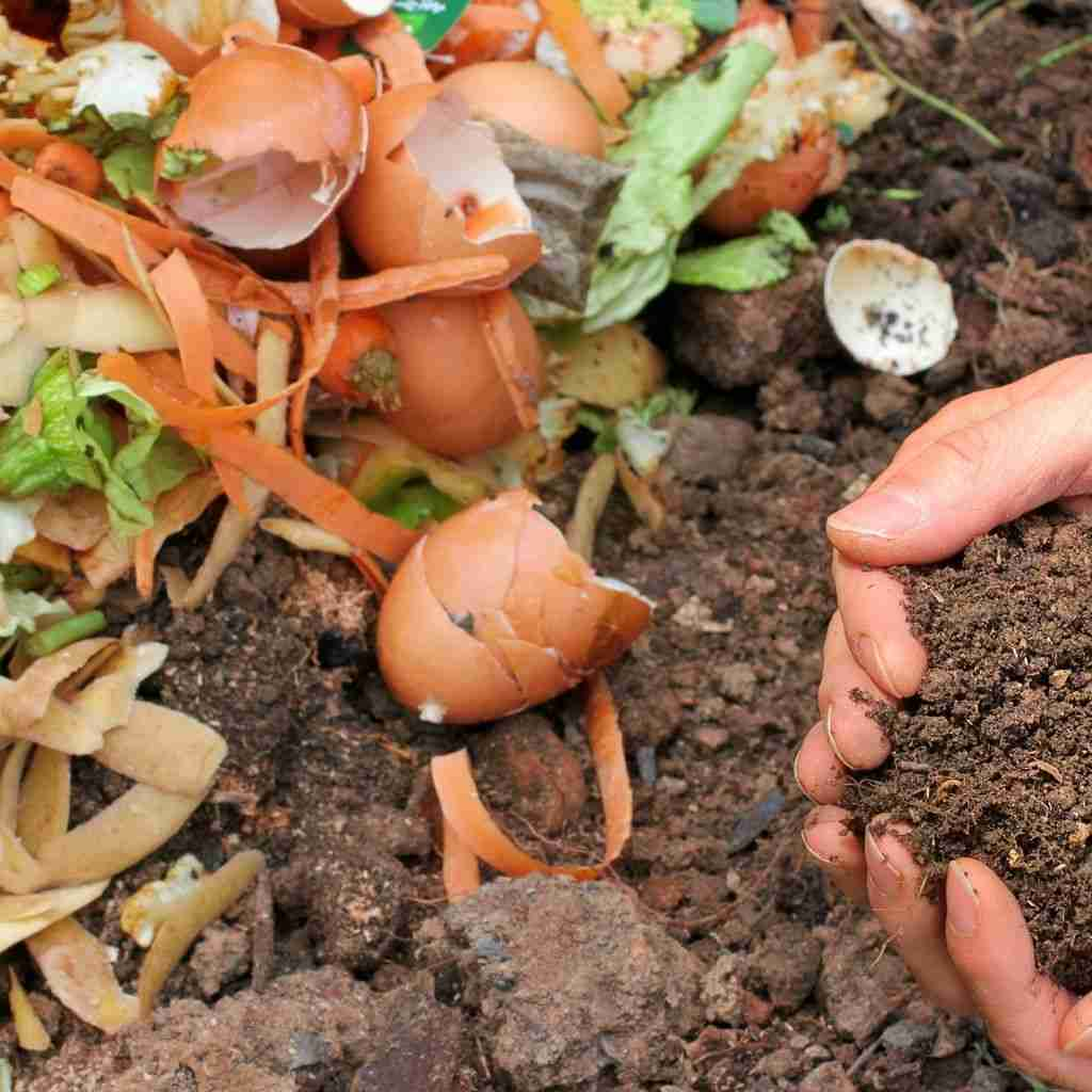 permaculture and gardening