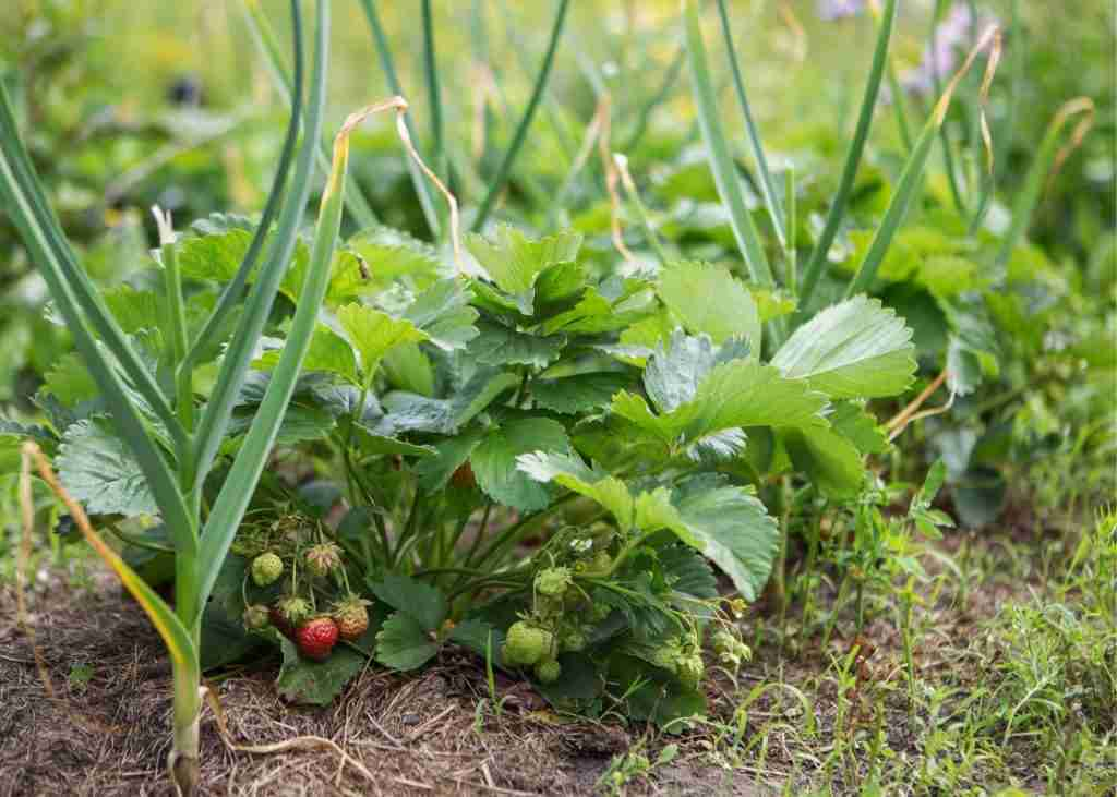 permaculture gardeining